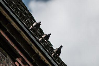 Drei Tauben_Langenberg