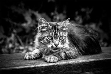 Katze_02_WildparkDuesseldorf