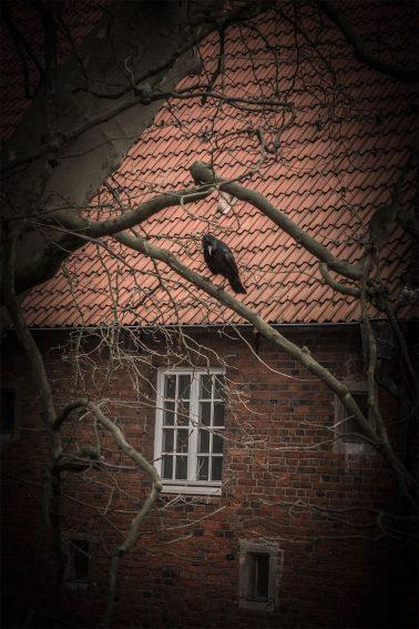 Krähe auf eine Baum vor Schloss Herten