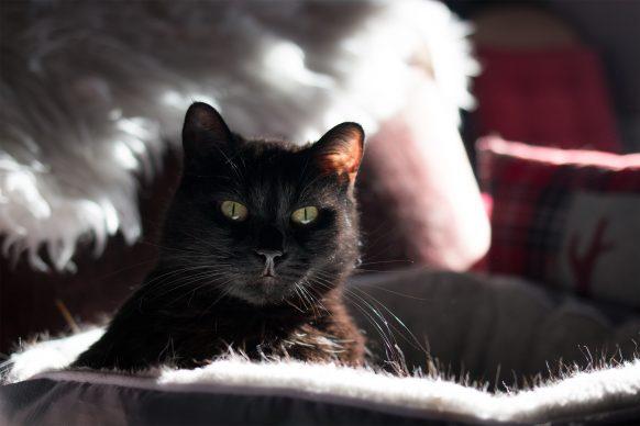 Katze Marsaili auf Kissen im Gegenlicht