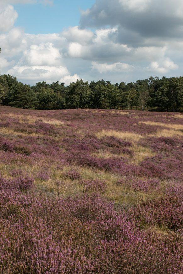 Westruper Heide im Herbst