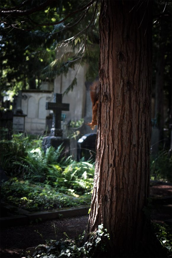 Eichhörnchen an einem Baum auf dem alten Friedhof in Bonn